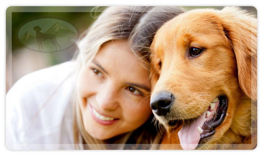 harmonisches bild einer frau mit ihrem labrador
