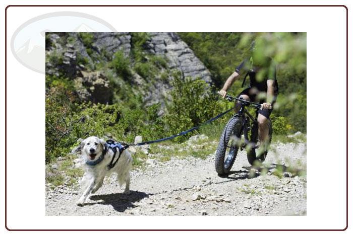hund mit i-dog canicross zuggeschirr zieht mtb
